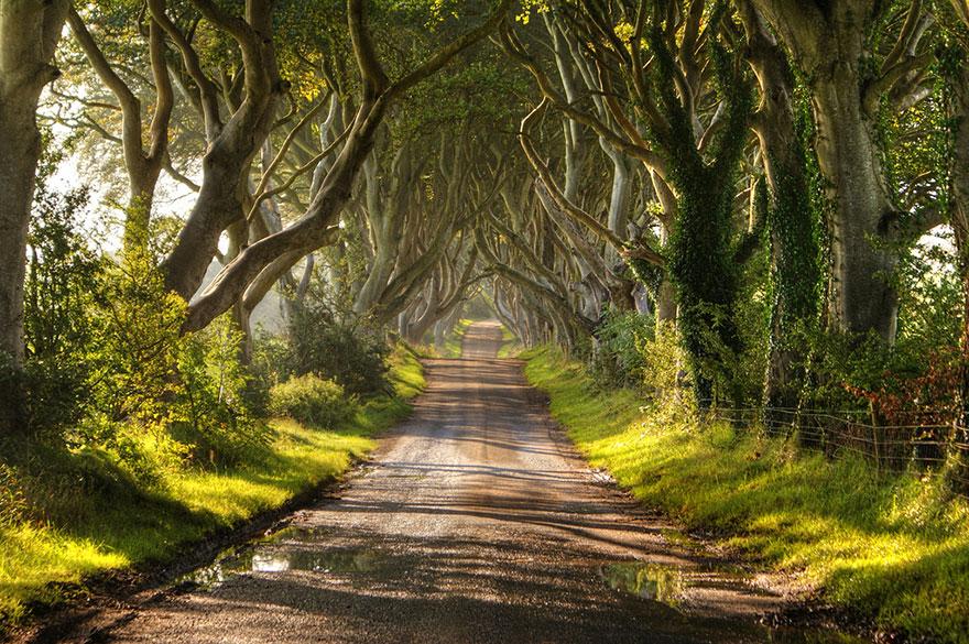 amazing trees 6 2
